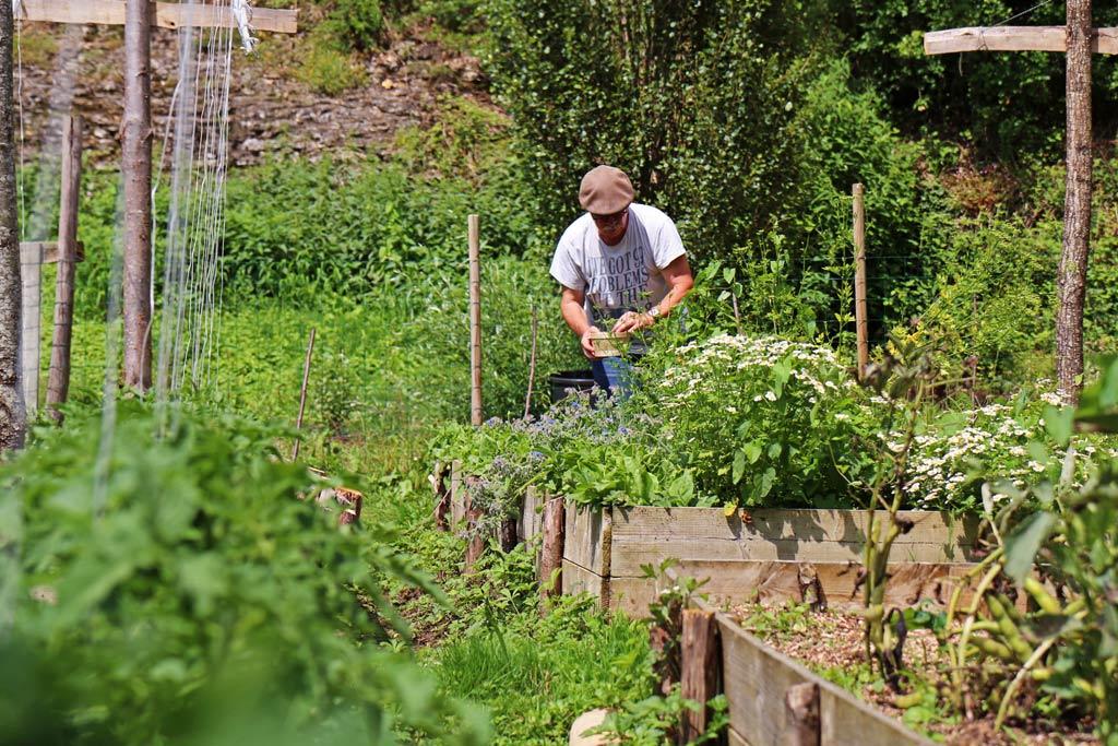 Pierre dans son potager qui respecte les principes de la permaculture