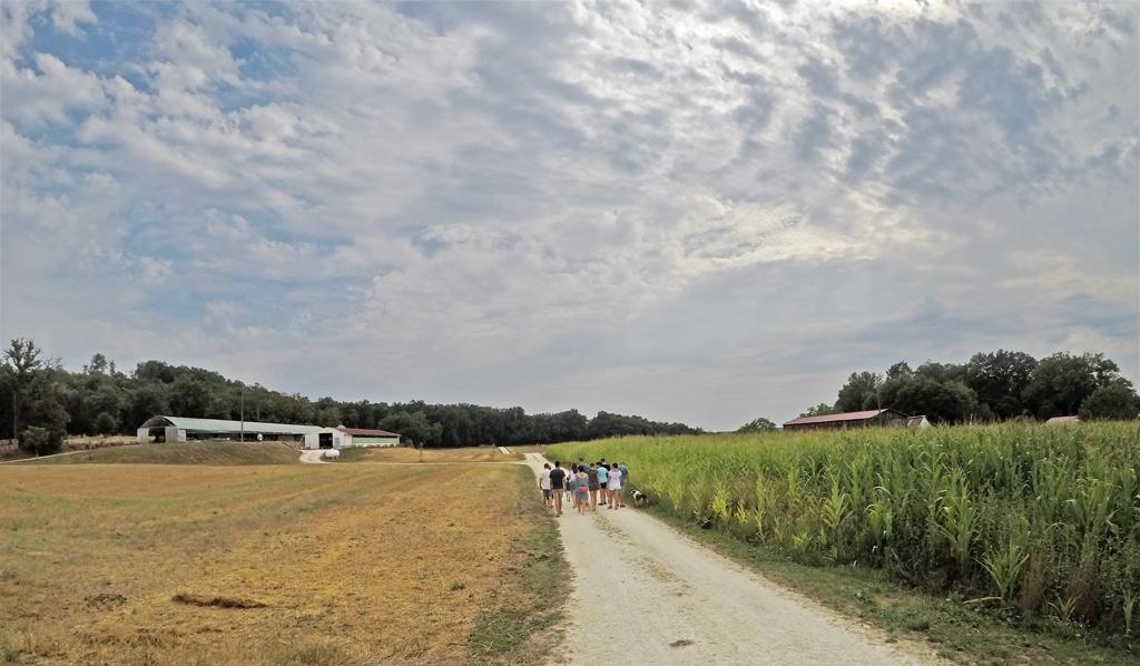 Le champs à droite, qui fournit une partie du grain des oies