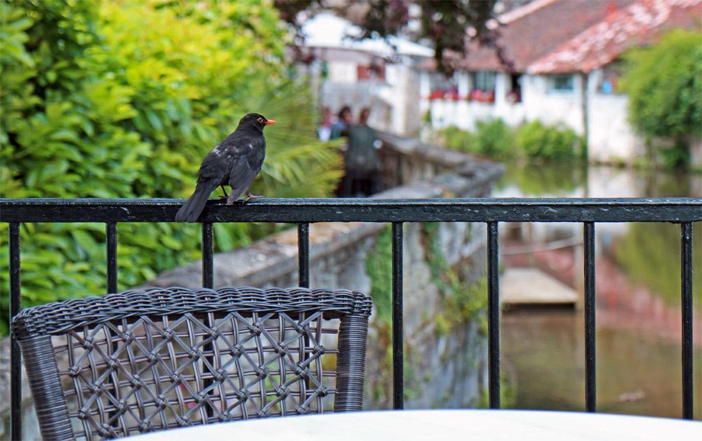 Les oiseaux curieux