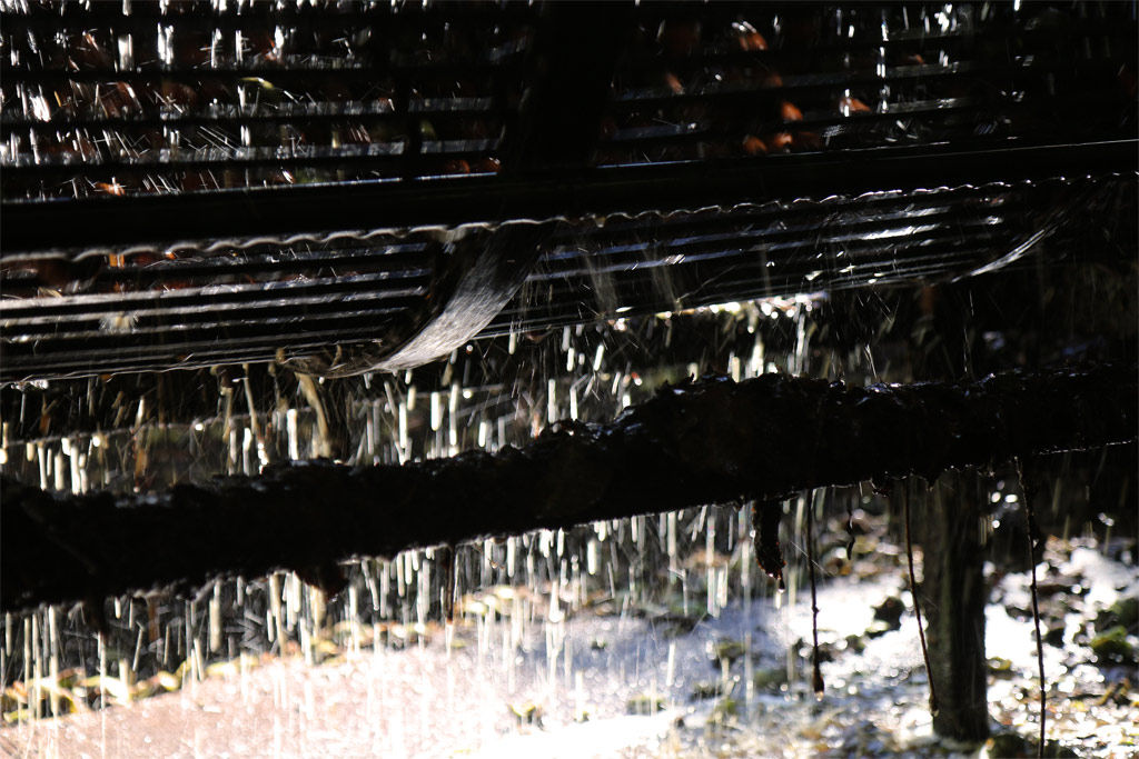 Les noix passent dans ce tambour qui lave et retire le brou