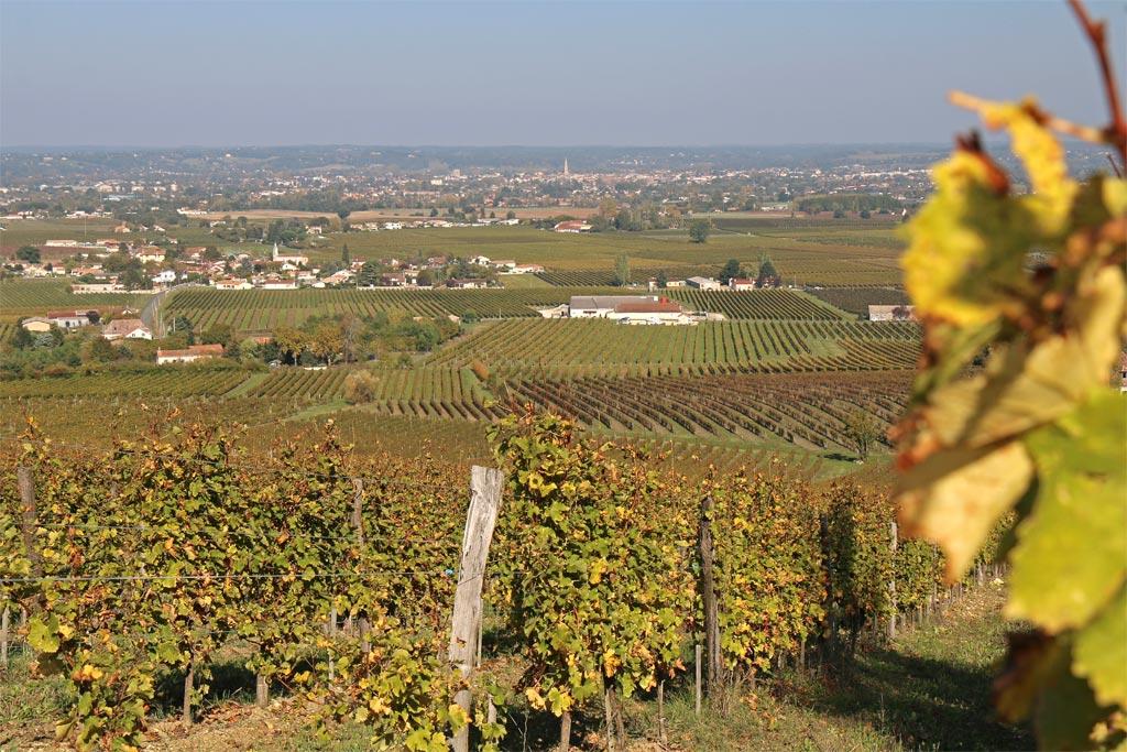 La ville de Bergerac et le lit de la Dordogne au loin, depuis les coteaux