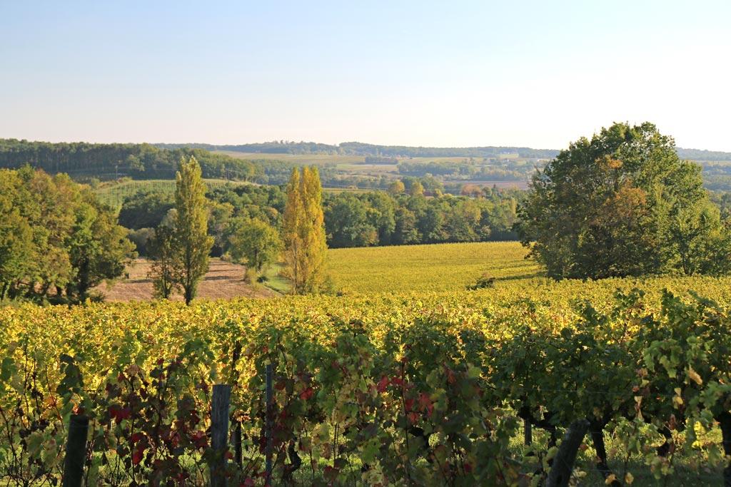 Un environnement de travail, que savent apprécier les fiers vignerons