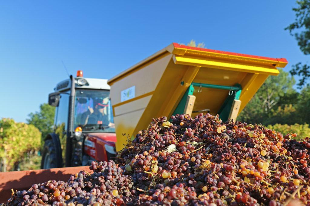 On met les raisins dans le tombereau