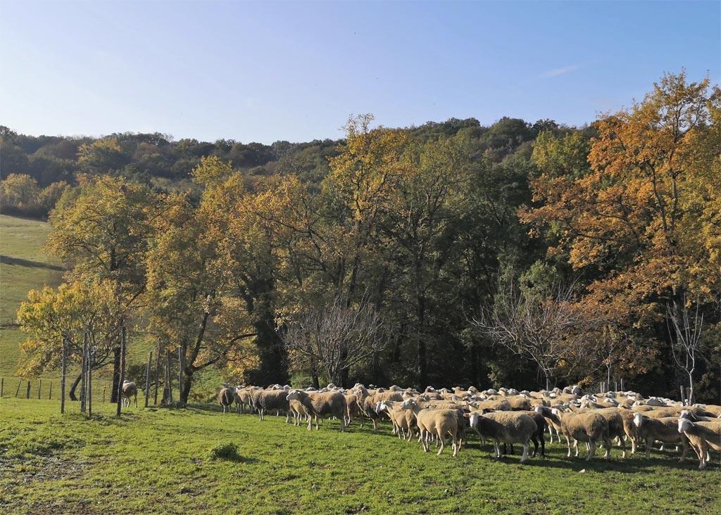 Les Picadies en Périgord