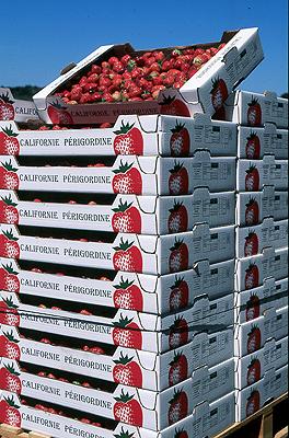 Les fameuses fraises de Vergt